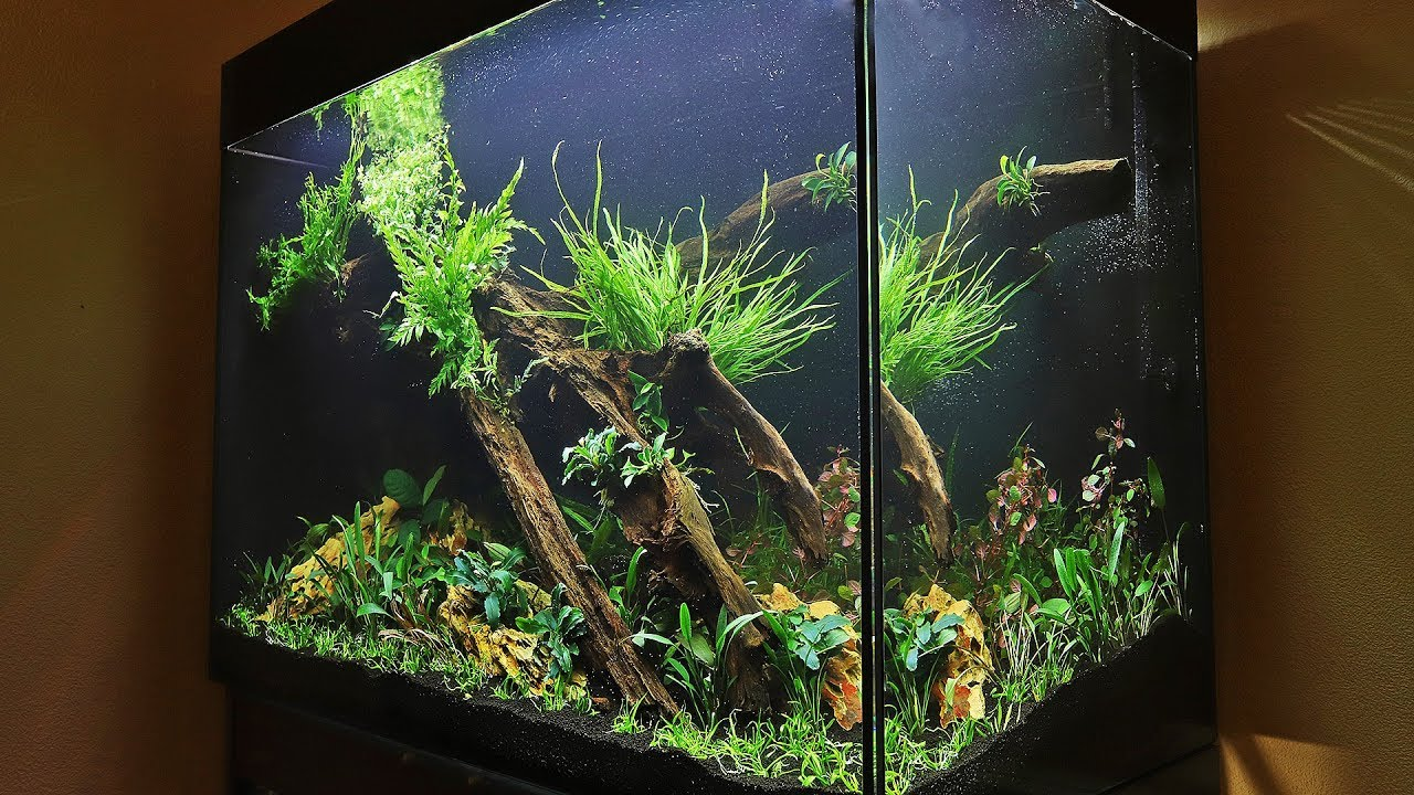 HOW TO AQUASCAPE a Tall Planted Tank - eaFreshwater 900 ...