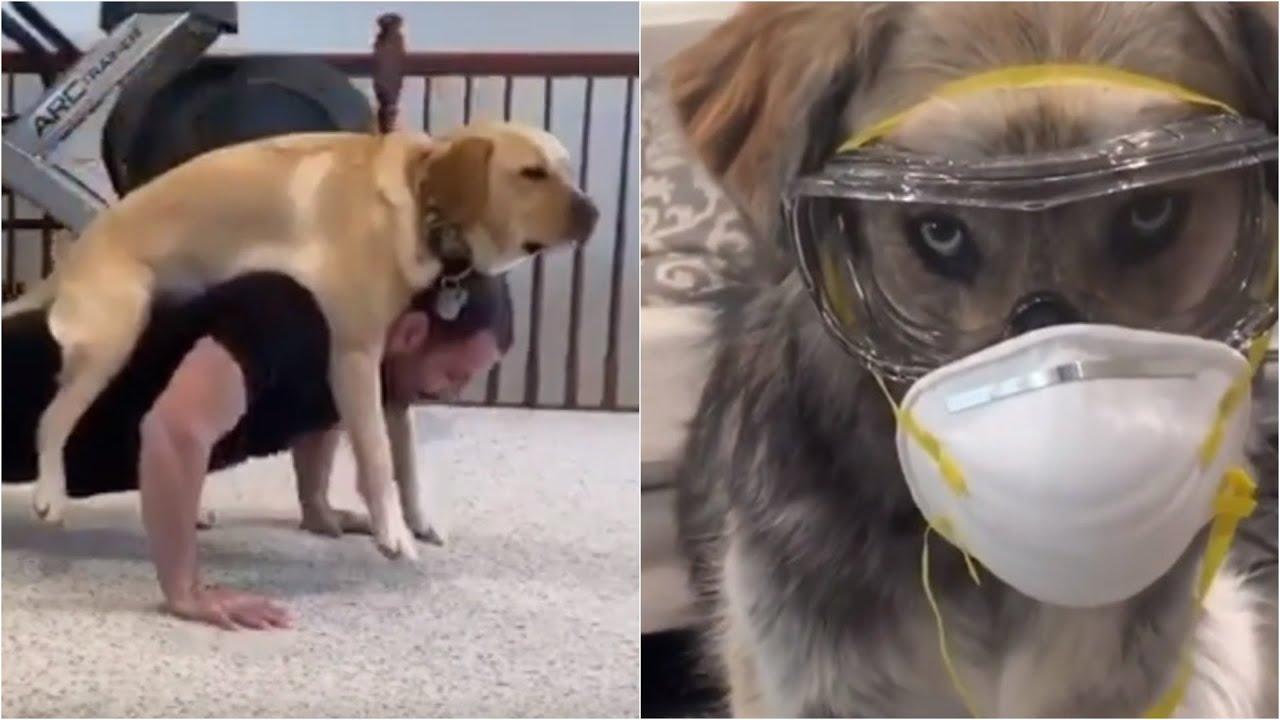20 Animals that love COVID-19 Quarantine ? Funny Animals 2020 - CATS!