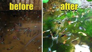 Hồ cá BỊ BỎ QUÊN 3 tháng trước và cái kết |  Aquarium after 3 months forget