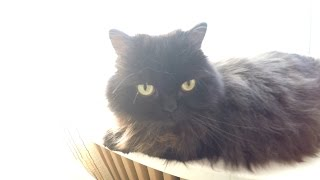Милые Носы, Lovely Noses (черный кот)