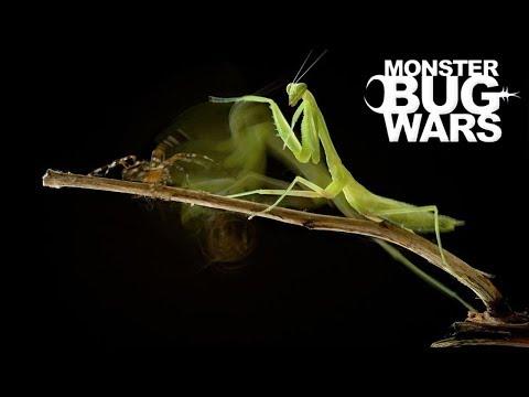 When Mantises Attack #2 - MONSTER BUG WARS