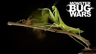 When Mantises Attack #2 - MONSTER BUG WARS