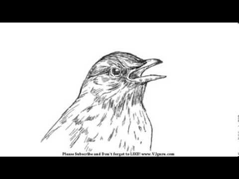How To Draw A Bird Face - YouTube