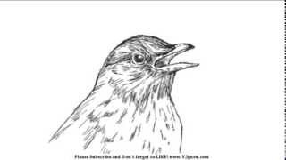 How to Draw a Bird Face