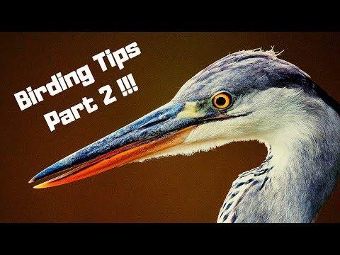 Bird Watching | Five Tips And Tricks (birding)