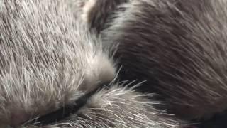 видео Сумка из натуральной кожи с отделкой из норки