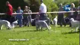 117-я Московская межрегиональная выставка охотничьих собак. Младший ринг.