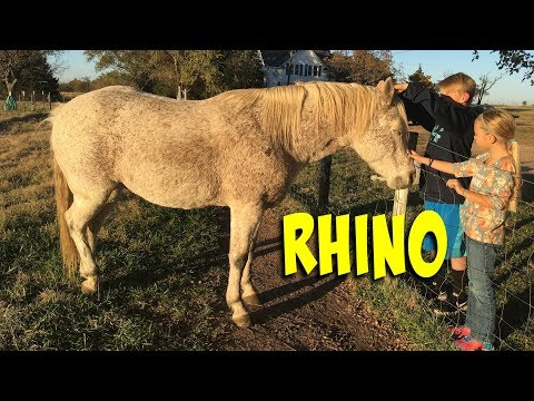 Introducing Rhino