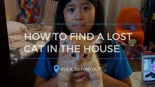 How to Call a Lost Cat in the House