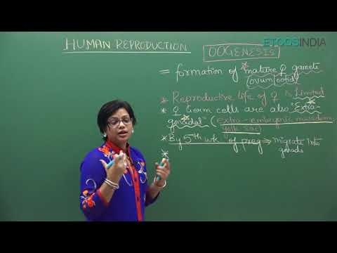 NEET video lectures of Human Reproduction by Dr  Akanksha Aggarwal AA  Mam