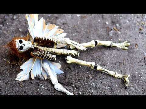 FAIRY SKELETON IDENTIFIED!
