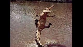 Смешные животные  Не шутите с крокодилом!