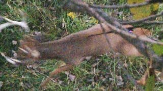 Monster Buck spear kill!!!