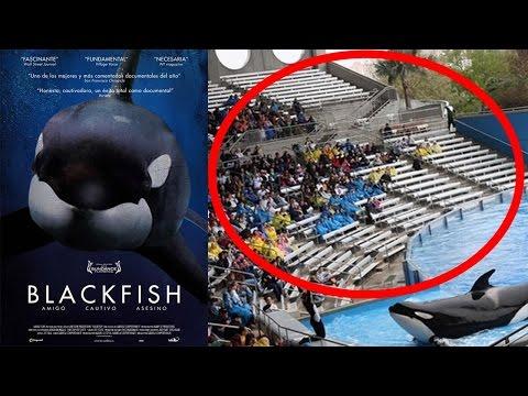 BLACKFISH UPDATE 2017 SeaWorld Attendance PLUMMETS! Tilikum Revenge? Blackfish Killer Whale