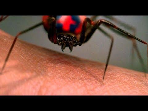 Радиоактивный паук кусает