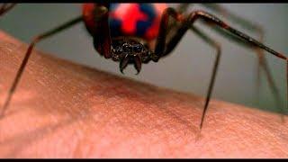 Радиоактивный паук кусает Питера Паркера. Человек ...
