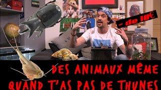 DES ANIMAUX MÊME QUAND T'AS PAS DE THUNES !!