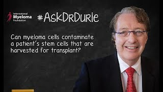 Can myeloma cells contaminate a patient's stem cells that are harvested for transplant?