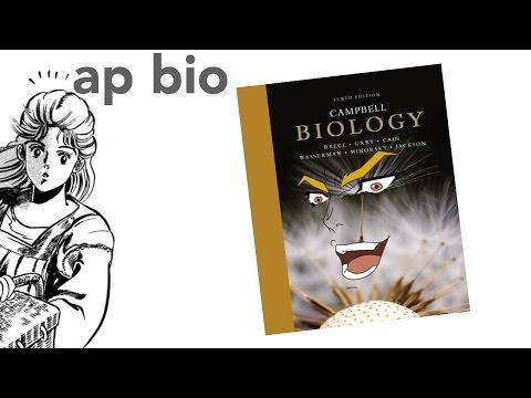 JoJo's Biology Adventure
