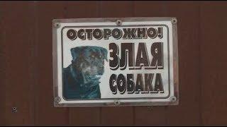 Жители частного сектора, имеющие собак, должны обзавестись табличками (Бийское телевидение)