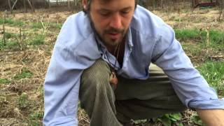 Winter-kill Cover Crop Update: Early Spring