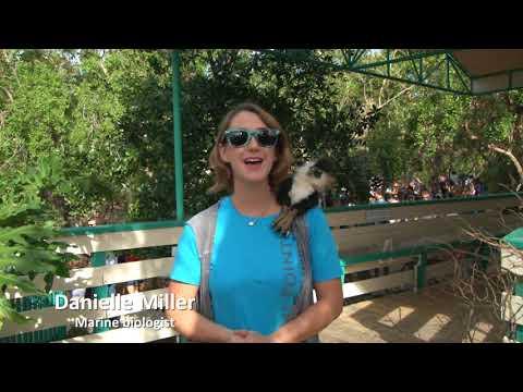 recap of the 2nd Annual Crane Point Hammock Fall Harvest in Marathon Florida