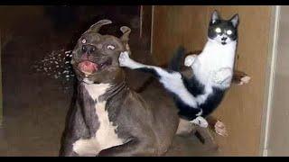 Приколы с животными \ смешные животные \ funny pets \ смешные домашние животные \ Dogs and /  Cats