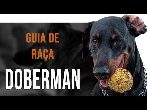 DOBERMAN - Tudo sobre a raça