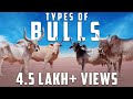 Know The Types Of Bulls | Amazing Jallikattu Video | Kichdy video