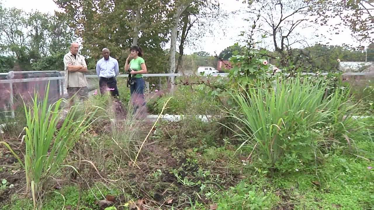 Breaking Ground Green Roof: Urban Agriculture – Greentrends