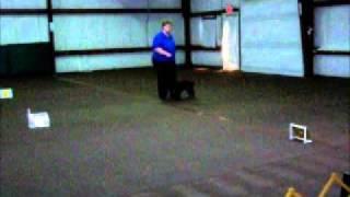 Cocker Spaniel In Beginner Novice A - Oct 23, 2010