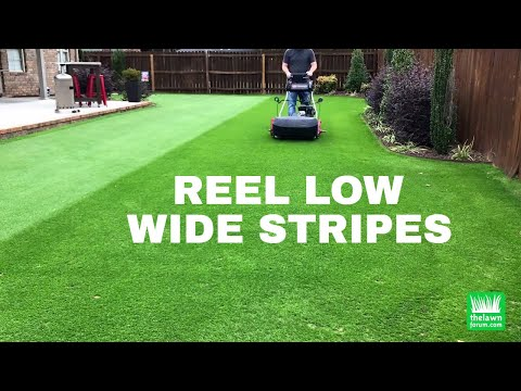 Reel Low Perennial Ryegrass | Wide Stripes