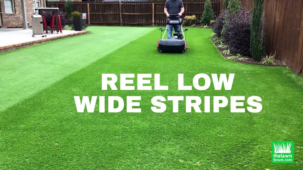 Reel Low Perennial Ryegrass | Wide Stripes