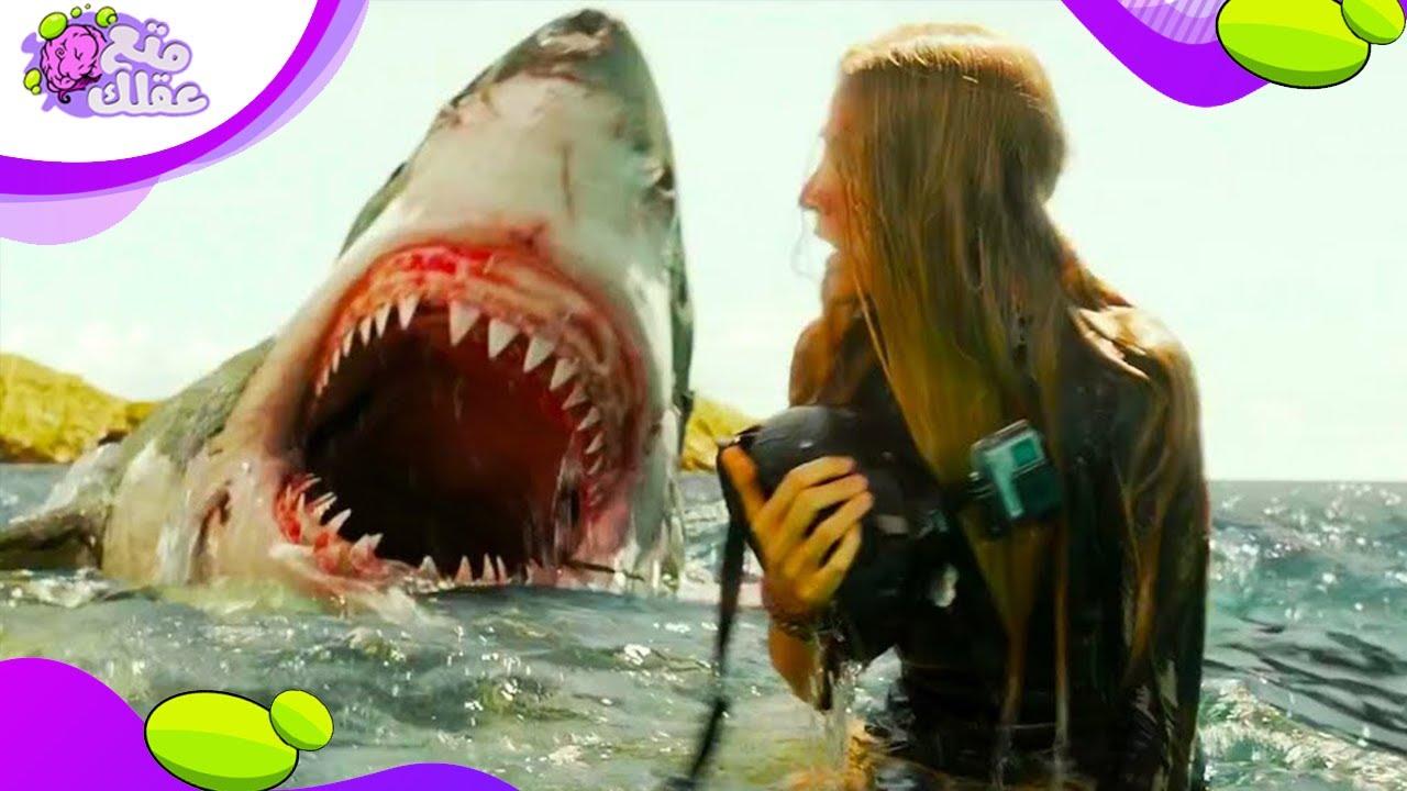 اسماك القرش تكره مذاق البشر وتتركك بعد أول قضمة !