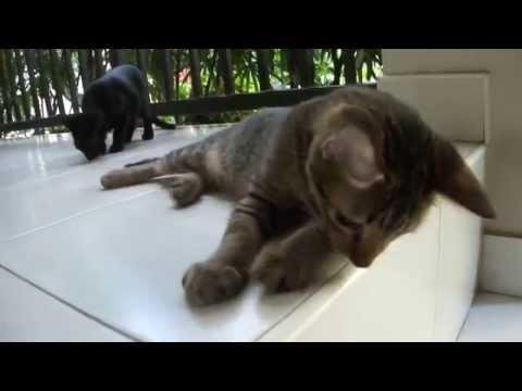 00014_โบวี่ น้องแมวอายุ 3 เดือน
