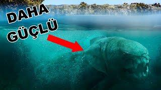 Megalodondan Bile Daha Güçlü Olan 4 Deniz Yaratığı