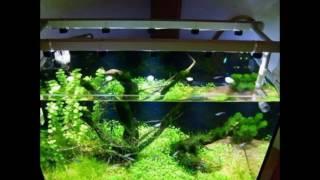 Светодиодное освещение аквариума своими руками(Светодиодное освещение аквариума своими руками http://svoimi-rukami.vilingstore.net/Svetodiodnoe-osveshhenie-akvariuma-svoimi-rukami-c018304 ..., 2016-06-22T15:49:30.000Z)