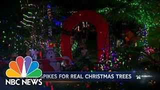 Real Christmas Tree Sales Soar | NBC Nightly News