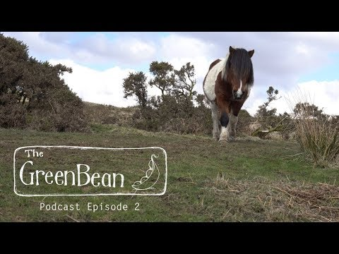 the-green-bean-podcast-episode-2
