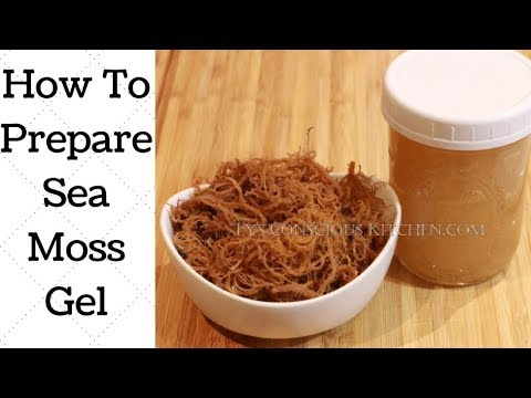 Irish Sea Moss – Gel and How To Make It! - Ty's Conscious