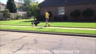 Annie - Tulsa Dog Obedience Training - Oklahoma