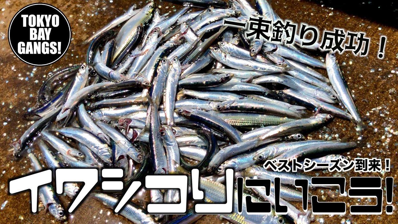 【検見川浜突堤】イワシ釣りに行こう!!一束釣り成功!ベストシーズン到来!誰でも簡単に釣ることができます!TOKYO BAY GANGS!