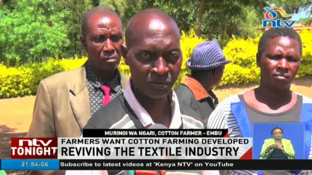 Mbeere cotton farmers want cotton ginneries revived to save their livelihoods