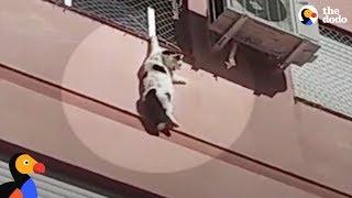 猫がビル4階で動けなくなった…勇気ある男性が救出(動画)