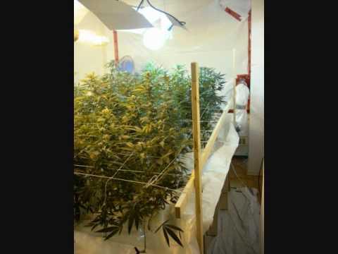 Hydroponic Flood Table Flood and Drain Marijuana.wmv - YouTube