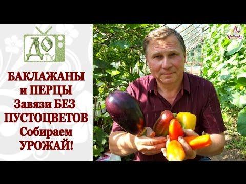 Баклажаны, запеченные с томатами и болгарским перцем