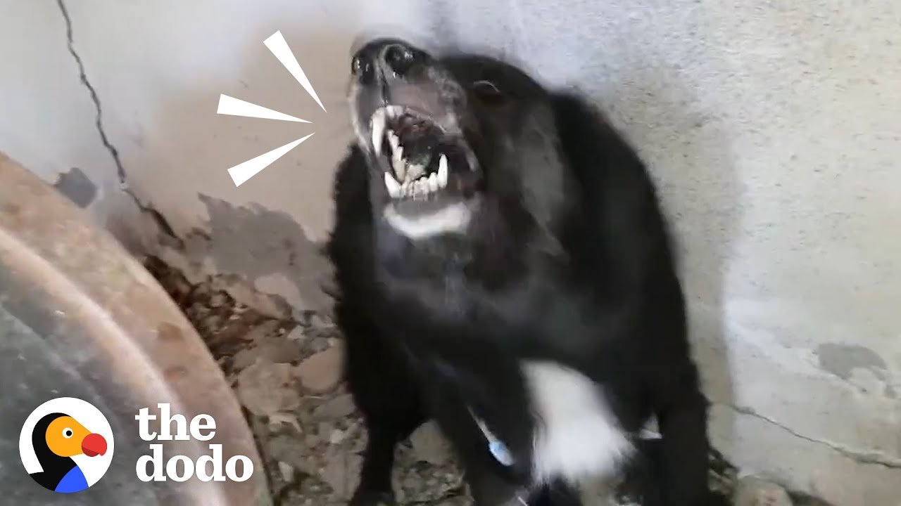 Aggressive Dog Turns Into The Biggest Mush As Soon As Takis Is Kind To Her | The Dodo