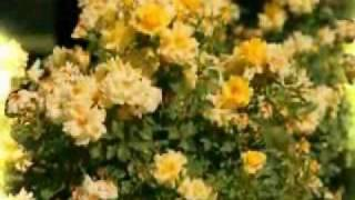 Hayden Panettiere - I Still Believe