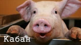 Голоса животных. Животные которые живут на ферме.  Познавательное видео для детей