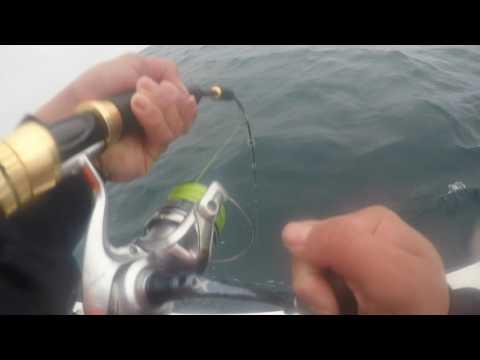 Long Reef Kingfish
